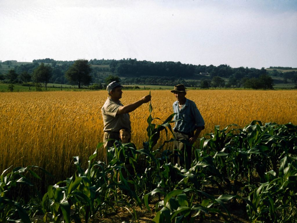1950s_franklin_rymon_with_brent_inspect_corn-0032_sm-jpg