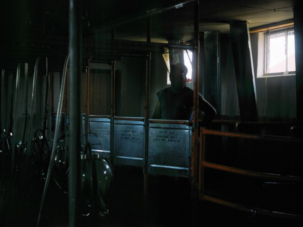 1958_farmer_in_milking_stall__-0007_sm-jpg