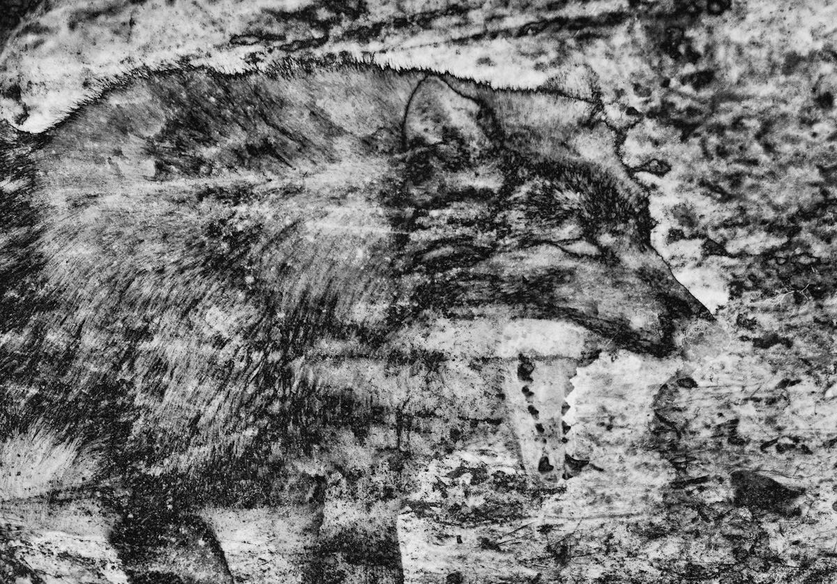 Cave Wolf